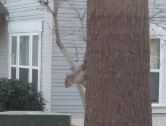 Squirrels scurry